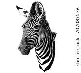 zebra head sketch vector... | Shutterstock .eps vector #707089576
