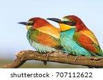 couple of beautiful birds | Shutterstock . vector #707112622