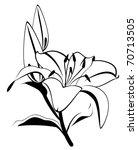 beautiful tropical lillies | Shutterstock .eps vector #70713505