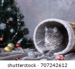 Grey Kitty Under The Christmas...