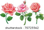 Set Of Three Pink Roses