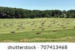 Square Hay Bales In Freshly Cut ...