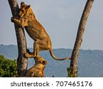 Lions On A Tree Close Up