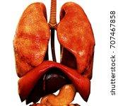 human body organs anatomy. 3d | Shutterstock . vector #707467858