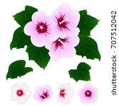 Hibiscus Syriacus   Rose Of...