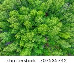 top view of trees  | Shutterstock . vector #707535742