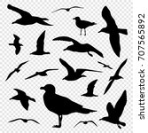 black silhouette set of seagull ... | Shutterstock .eps vector #707565892