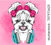 girl puppy with cute bows.... | Shutterstock .eps vector #707571625