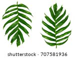 palm leaf flat lay top view | Shutterstock . vector #707581936