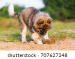 picture of a cute elo puppy who ... | Shutterstock . vector #707627248