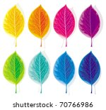 eight leaves  painted in the... | Shutterstock .eps vector #70766986