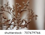 withered flowers and dry stems... | Shutterstock . vector #707679766