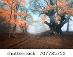 Autumn Tree In Fog. Old Magica...