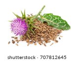 Silybum marianum  milk thistle ....
