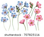 Stock photo set of watercolor flowers hand drawn illustration of blue and pink forget me nots floral 707825116