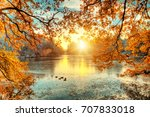 Beautiful Colored Trees With...