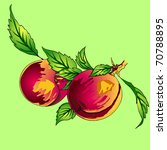 two peaches with leaves on a... | Shutterstock . vector #70788895