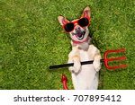 chihuahua dog ghost for... | Shutterstock . vector #707895412