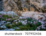 Lovely Marmots Couple