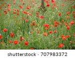 a flower meadow on a meadow... | Shutterstock . vector #707983372