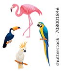 exotic tropical birds  ... | Shutterstock .eps vector #708001846