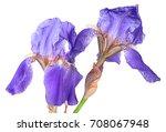 Closeup Two Iris Flowers...