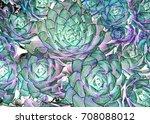 artistic view of scuculent...   Shutterstock . vector #708088012