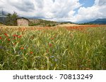 Wheat field and flowers in the Provence, France - stock photo