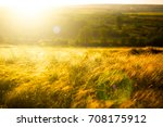 autumn dry grass over sunset or ... | Shutterstock . vector #708175912