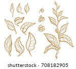set of tea bush branches with... | Shutterstock . vector #708182905