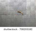 Dry Leaf On Gray Tiles  Top View