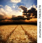 road in field with gold ears of wheat under dramatic sky - stock photo