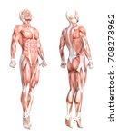 conceptual anatomy healthy... | Shutterstock . vector #708278962