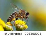 detail of bee or honeybee in... | Shutterstock . vector #708300076