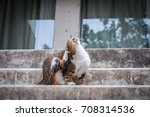 brown cat sitting at concrete... | Shutterstock . vector #708314536
