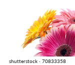 Several Gerberas On White...