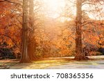 season of autumn colors. forest ... | Shutterstock . vector #708365356