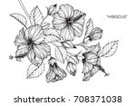 hand drawn and sketch hibiscus... | Shutterstock .eps vector #708371038