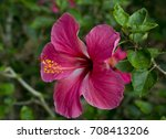 tropical flower | Shutterstock . vector #708413206