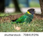 colorful parrot sitting on the... | Shutterstock . vector #708419296