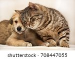 Stock photo cat and puppy 708447055