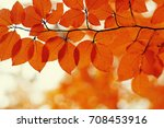 Autumn Leaves On Blurred...