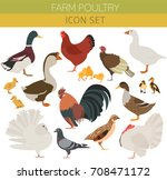 poultry farming. chicken  duck  ... | Shutterstock .eps vector #708471172