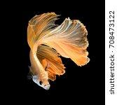 close up art movement of betta... | Shutterstock . vector #708473122