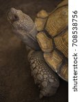 Small photo of African spurred tortoise in zoo.