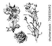 hand drawn botanical art... | Shutterstock .eps vector #708550492