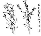 hand drawn botanical art... | Shutterstock .eps vector #708550558