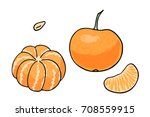 vector illustration of juicy... | Shutterstock .eps vector #708559915