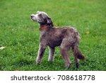 terrier | Shutterstock . vector #708618778