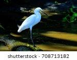 snowy egret costa rica bird | Shutterstock . vector #708713182